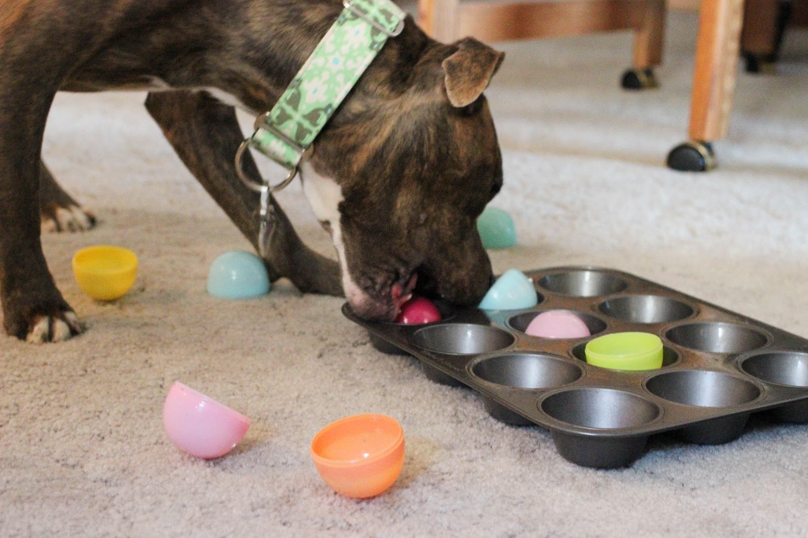 brain stimulating games for dogs